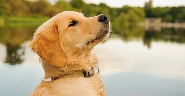 Tránh cho trẻ tiếp xúc với động vật vì lông động vật dễ gây tình trạng viêm da dị ứng ở trẻ nhỏ